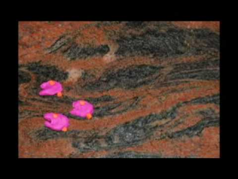Nitrate Cycle Claymation