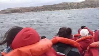 20120917_20 - Madryn-Ballenas-Pingüinos-Dique.wmv