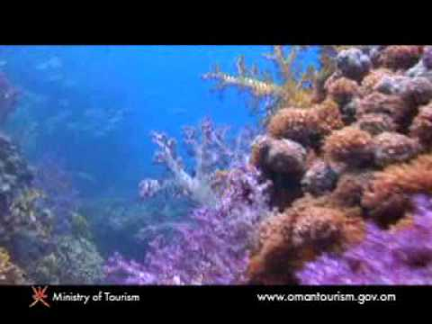 Marine life of Oman