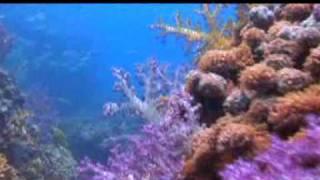 Marine life of Oman
