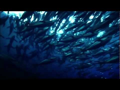 Oceana: How Saving the Oceans Can Feed the World