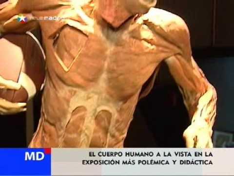 Bodies, exposición del cuerpo humano con cadáveres