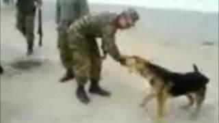 兵士が訓練中に乱入してくるじゃれてくる犬