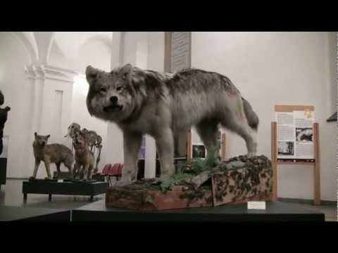 TORINO - MUSEO DI SCIENZE NATURALI