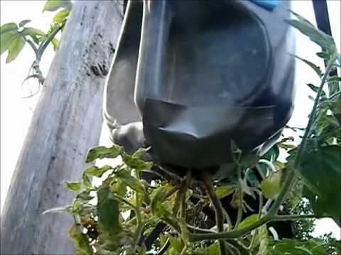 Milk Bottle Hanging Planters