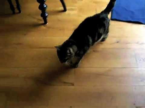 Cat Playing I Spy