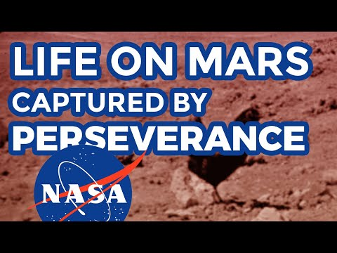 Life on Mars: real uncut NASA footage by Curiosity rover displaying life form on mars - UCpmiskFuJw3Y-VwvHCAFwfA