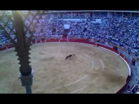 Toros Corpus 2010 - Banderillas 2º Toro Fandi