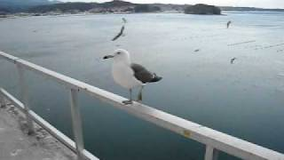 Seagulls Welcoming Guests at 南三陸ホテル観洋