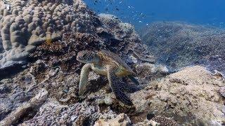 Google Street View สามารถมุดลงไปดูใต้สมุทรได้แล้ว