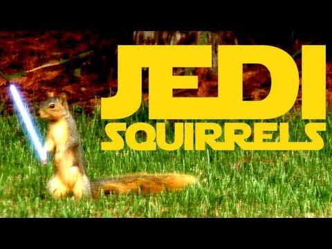 Jedi Squirrels