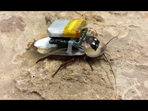 Bug avatar: Roaches controlled remotely via mini-computer   (technology)