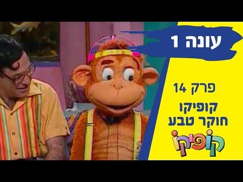קופיקו עונה 1 פרק 14 - קופיקו חוקר טבע