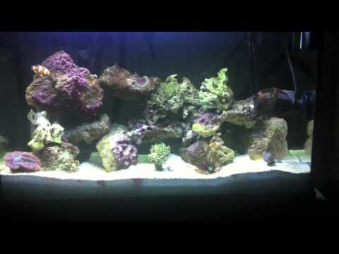 30 Gallon Reef Tank DAY45