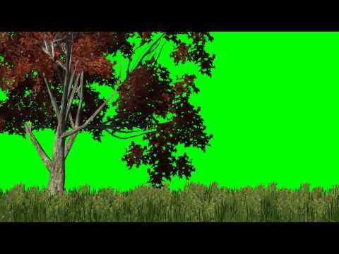 meadow with red tree in the wind -  green screen effects
