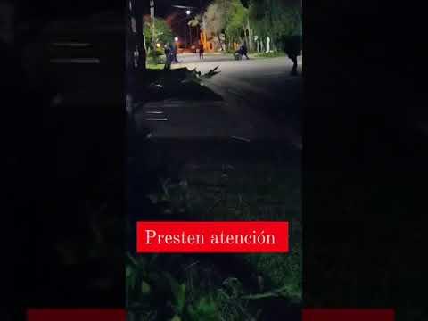 Desmienten video que muestra a mujer baleada por policías en Concordia