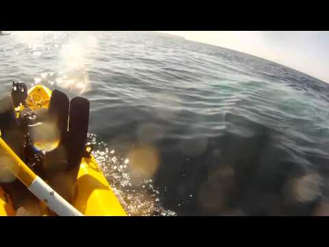Kayaking with Redondo Beach Blue Whales, Whale Spit, GoPro