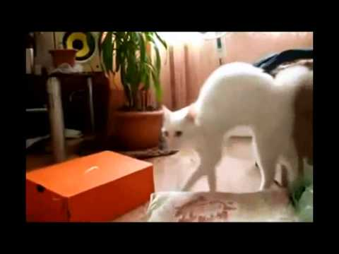 Funny Animal Compilation 2013