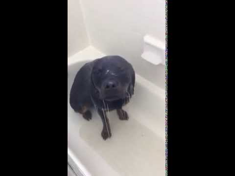 Meet Lena - The Dog That Loves To Take Showers