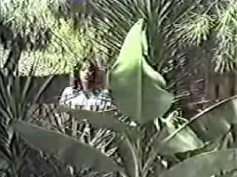 עפרה חזה-עץ הרימון