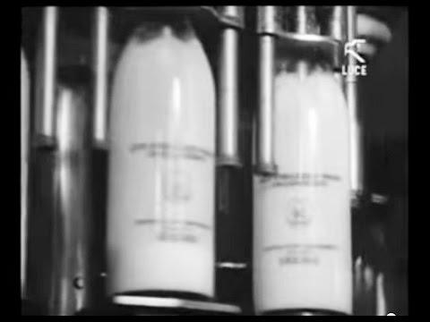 Arborea - Aziende pilota nella mungitura /1962 [Istituto LUCE]