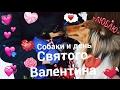 Собаки на день святого Валентина • Если бы собаки праздновали 14 февраля