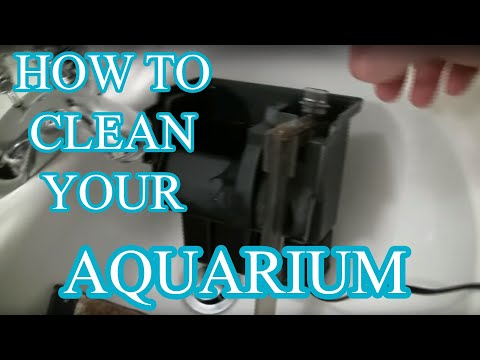 How to clean an aquarium - Beginners guide