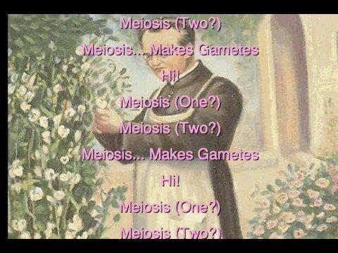 Hi, Meiosis