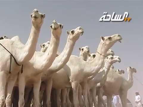 منقيات الساحة 2014 | الدوليات | منقية الشيخ / ماجد الغنام الهواشلة الدوسري