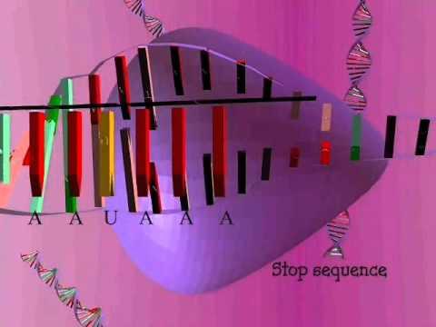 Protein Synthesis (Translation, Transcription Process).avi