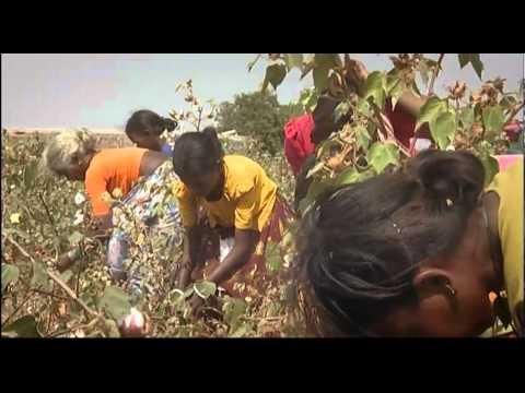I semi OGM del suicidio - Geni fuori controllo - Clip 2