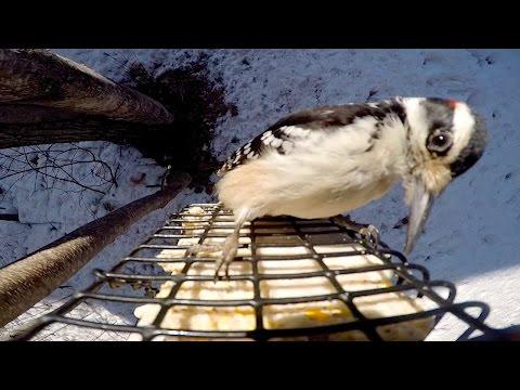 Bird Feeder GoPro: Suet Feeder