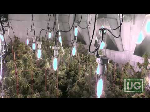 Current Culture Under Current Hydroponic System part 4