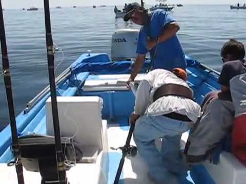 WFO Yellowtail Fishing off Loreto, B.C.S.