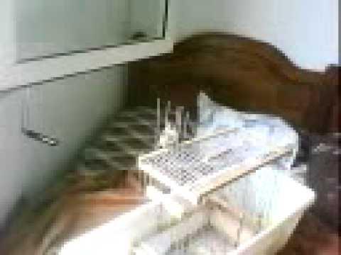 dressage de chardo 2012