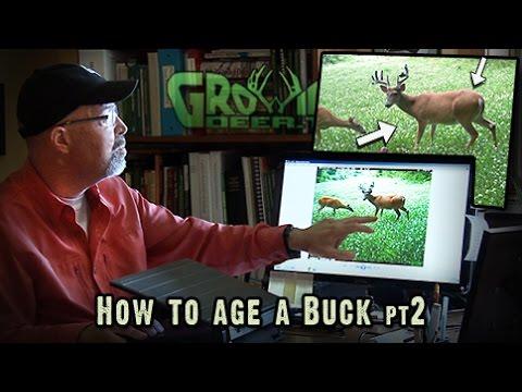 Deer Hunting: Big Buck, Shoot or Don't Shoot?