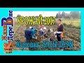 Убираем картошку у  Бабы Шуры. Урожай 2017
