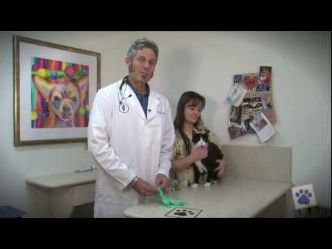 Animal Health Hospital: How To Express Your Pet's Anal Glands