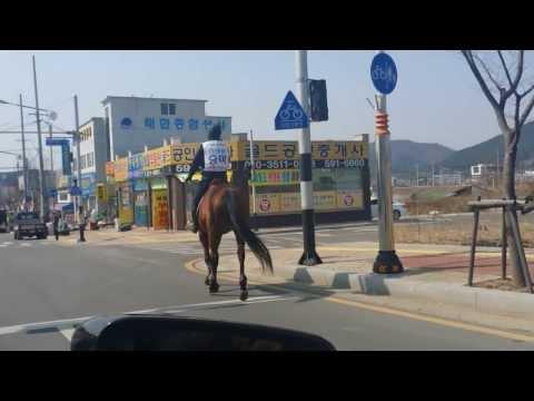 스크린승마-도로위를 달리다