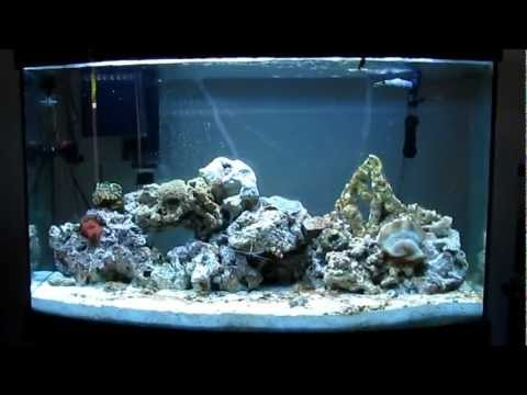 Reef tank update day 28