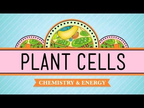 Plant Cells: Biology #6