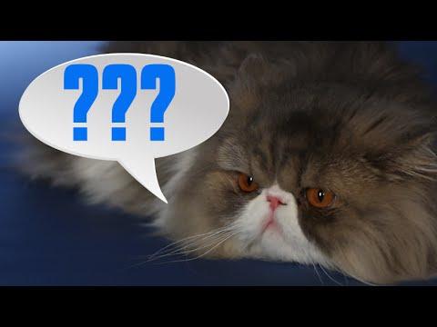 فيديو: ماذا تريد قطتك أن تقول لك