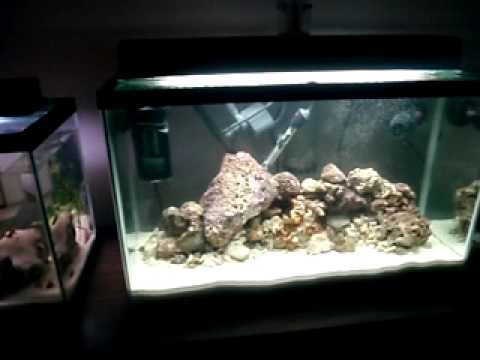 27 gallon saltwater aquarium cycling