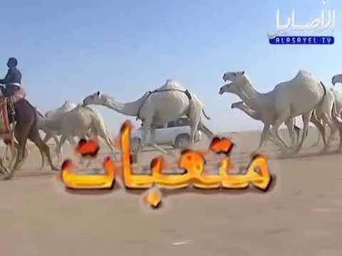 منقية الشيخ متعب بن غازي السميري - قناة الاصايل alasayel tv