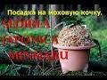 Как посадить японскую орхидею на моховую кочку .Sedirea japonica Minmaru