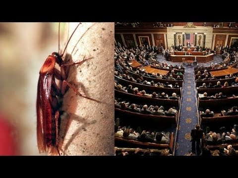 Congress Less Popular Than Cockroaches, Kardashians
