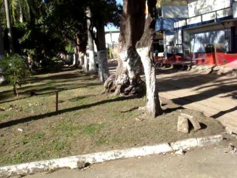 Ecocidio En Veracruz, Alameda Salvador Diaz Mirón, Reducción De Camellon