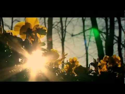 Max Gazzè - Il Solito Sesso (Official Video)