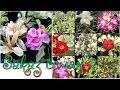 Заказ семян Адениума, кактусов, стапелии и др./ Мои КАКТУСЫ из семян