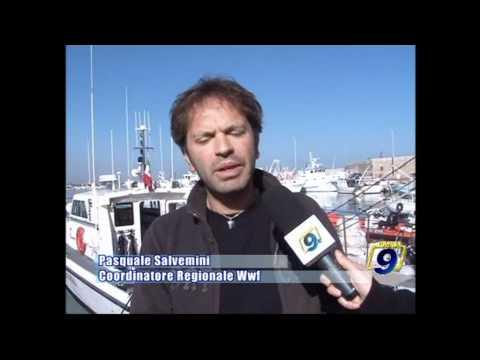 MOLFETTA - WWF | BiodiversaMente
